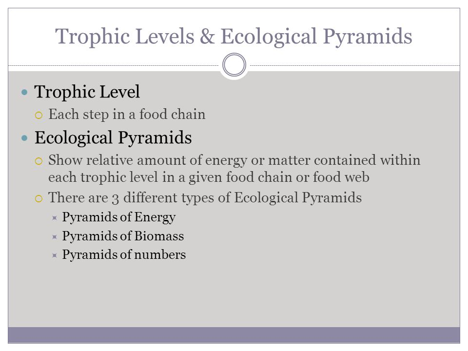 Trophic Levels & Ecological Pyramids Trophic Level  Each step in a food chain Ecological Pyramids  Show relative amount of energy or matter contained within each trophic level in a given food chain or food web  There are 3 different types of Ecological Pyramids  Pyramids of Energy  Pyramids of Biomass  Pyramids of numbers