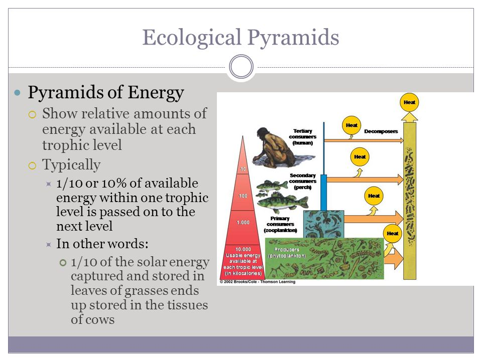 Ecological Pyramids Pyramids of Energy  Show relative amounts of energy available at each trophic level  Typically  1/10 or 10% of available energy