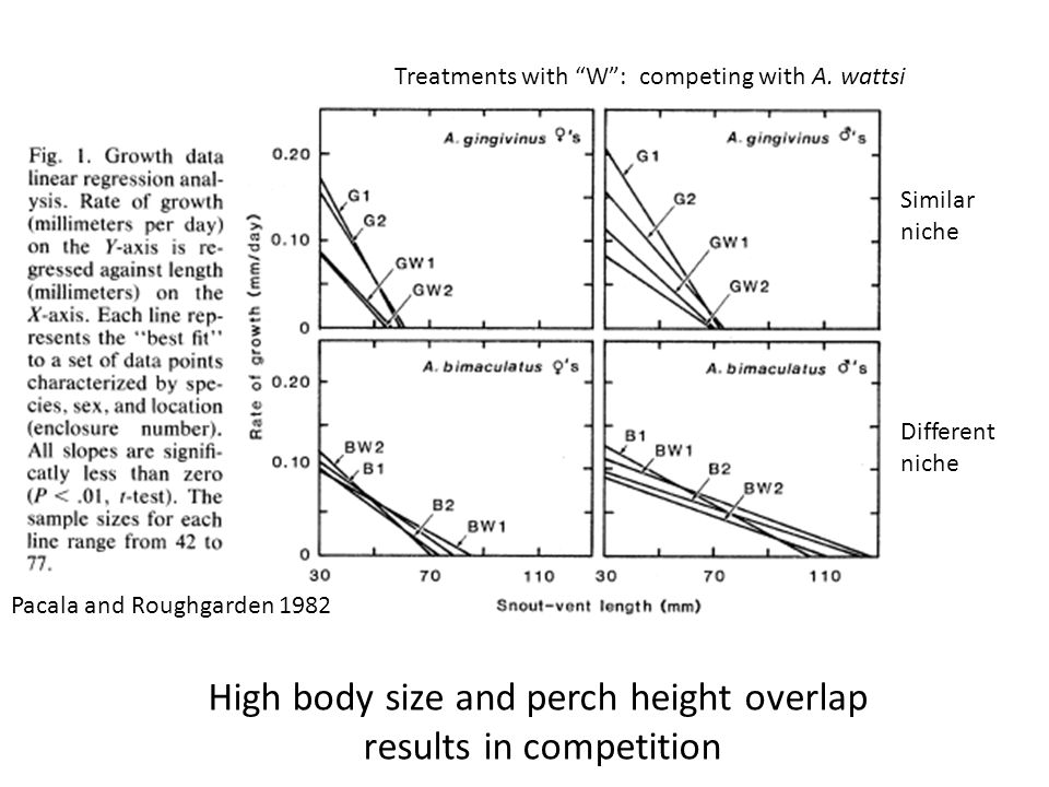 "High body size and perch height overlap results in competition Treatments with ""W"": competing with A. wattsi Pacala and Roughgarden 1982 Similar niche"