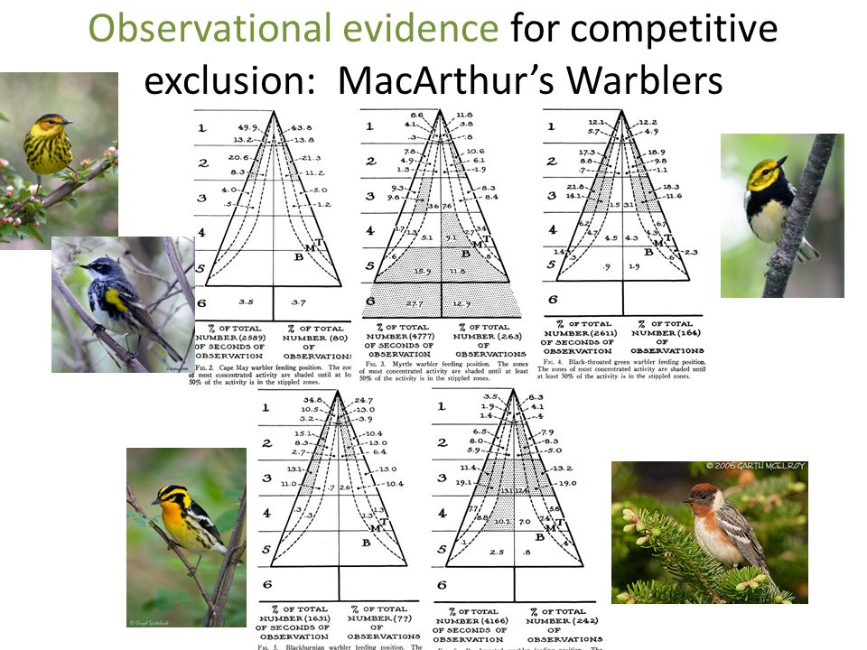 Observational evidence for competitive exclusion: MacArthur's Warblers