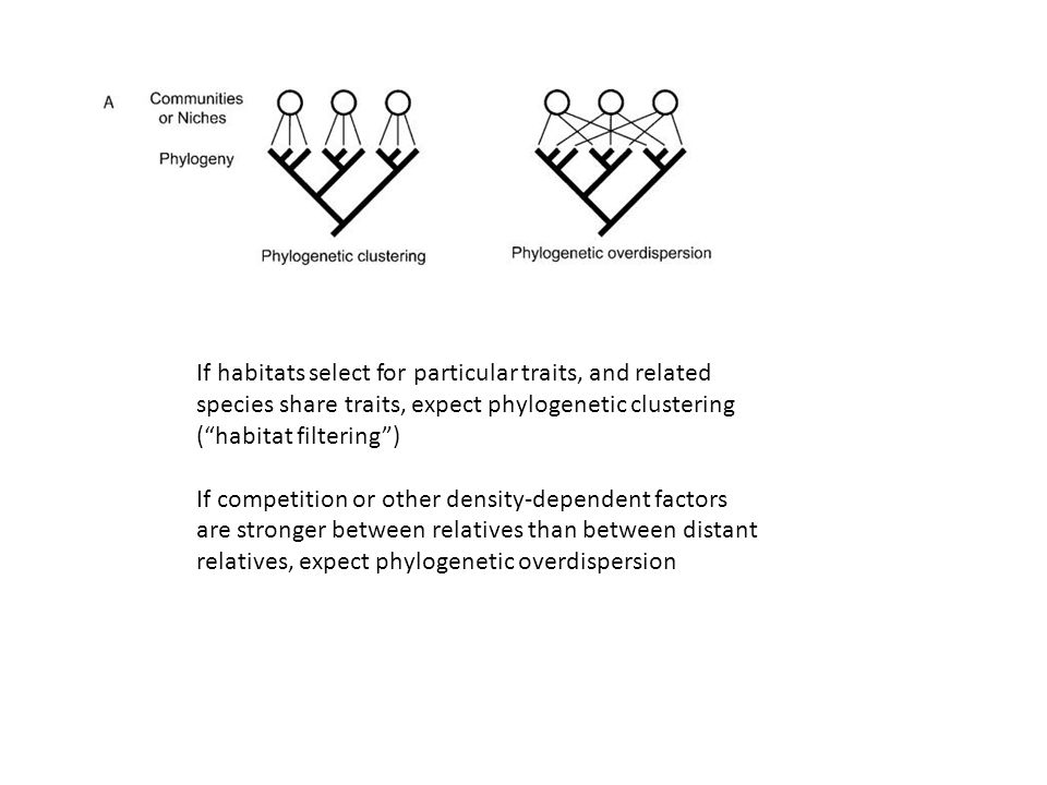 If habitats select for particular traits, and related species share traits, expect phylogenetic clustering ( habitat filtering ) If competition or other density-dependent factors are stronger between relatives than between distant relatives, expect phylogenetic overdispersion