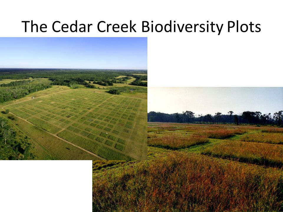The Cedar Creek Biodiversity Plots