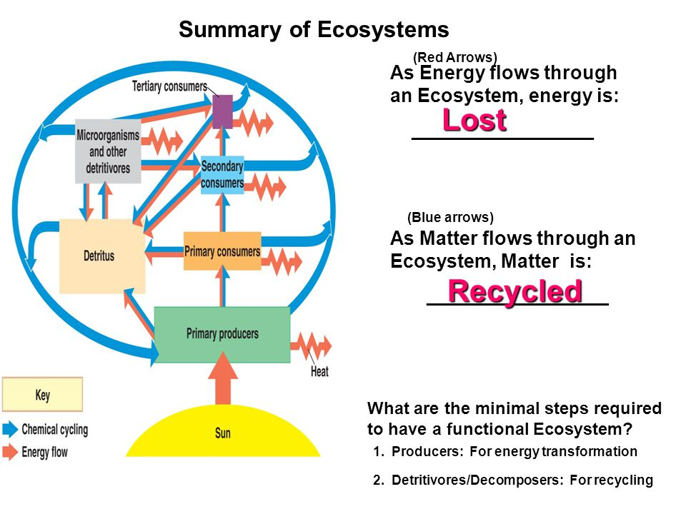 Summary of Ecosystems As Matter flows through an Ecosystem, Matter is: _________________ What are the minimal steps required to have a functional Ecos