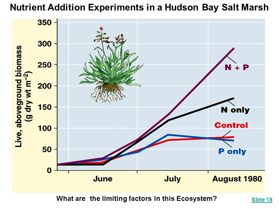 Nutrient Addition Experiments in a Hudson Bay Salt Marsh What are the limiting factors in this Ecosystem? Slide 18