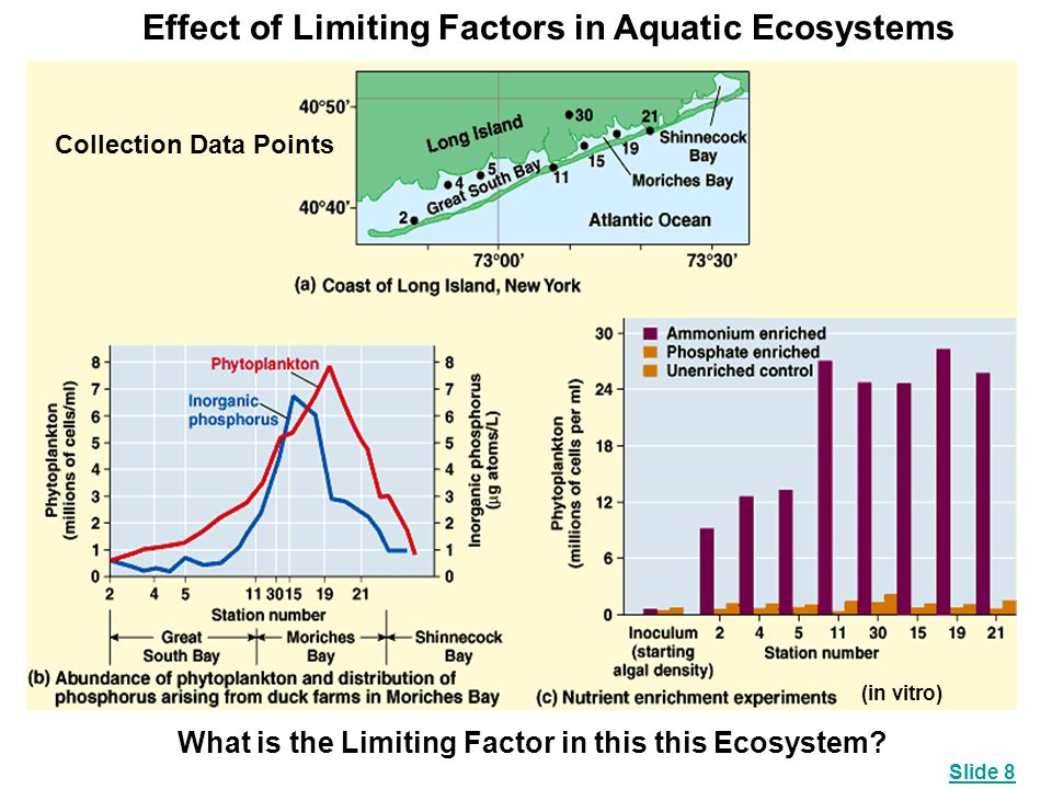 Effect of Limiting Factors in Aquatic Ecosystems Collection Data Points (in vitro) What is the Limiting Factor in this this Ecosystem? Slide 8