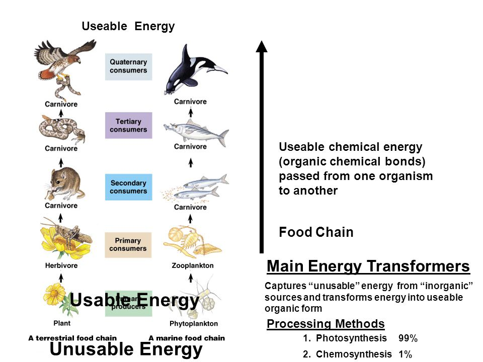 "Captures ""unusable"" energy from ""inorganic"" sources and transforms energy into useable organic form Main Energy Transformers Useable chemical energy ("