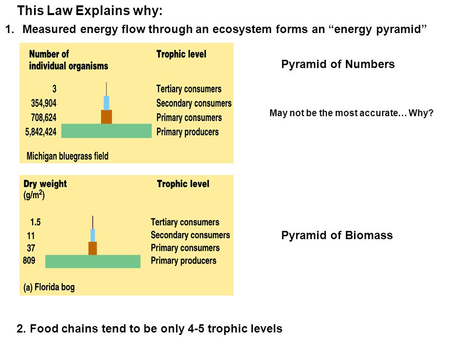 "This Law Explains why: 1.Measured energy flow through an ecosystem forms an ""energy pyramid"" 2. Food chains tend to be only 4-5 trophic levels Pyramid"