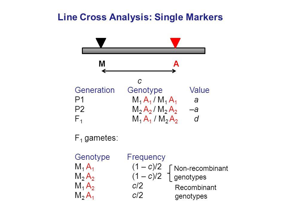 MA c Generation Genotype Value P1 M 1 A 1 / M 1 A 1 a P2M 2 A 2 / M 2 A 2 –a F 1 M 1 A 1 / M 2 A 2 d F 1 gametes: Genotype Frequency M 1 A 1 (1 – c)/2