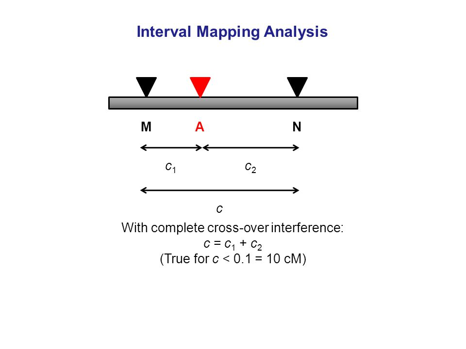 With complete cross-over interference: c = c 1 + c 2 (True for c < 0.1 = 10 cM) Interval Mapping Analysis MN c A c1c1 c2c2
