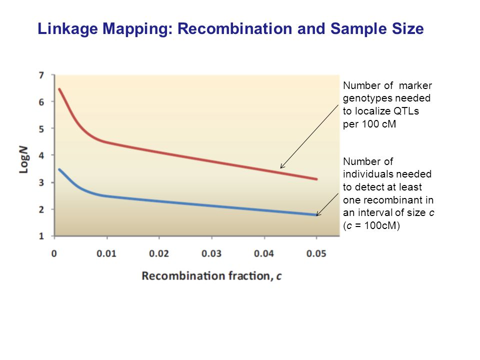 Linkage Mapping: Recombination and Sample Size Number of individuals needed to detect at least one recombinant in an interval of size c (c = 100cM) Number of marker genotypes needed to localize QTLs per 100 cM