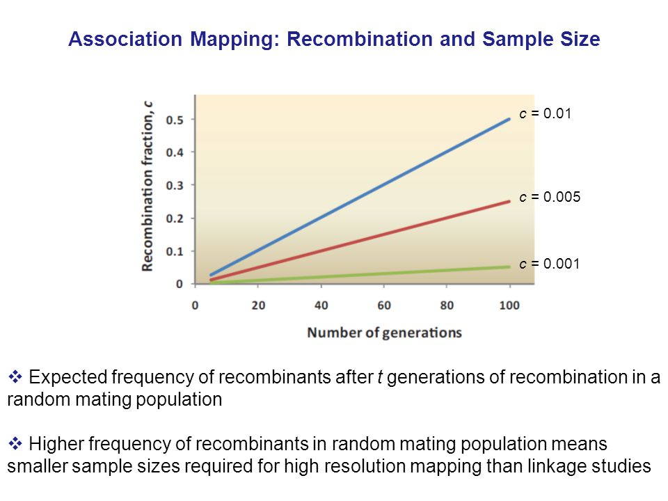 Association Mapping: Recombination and Sample Size  Expected frequency of recombinants after t generations of recombination in a random mating population  Higher frequency of recombinants in random mating population means smaller sample sizes required for high resolution mapping than linkage studies c = 0.01 c = 0.001 c = 0.005