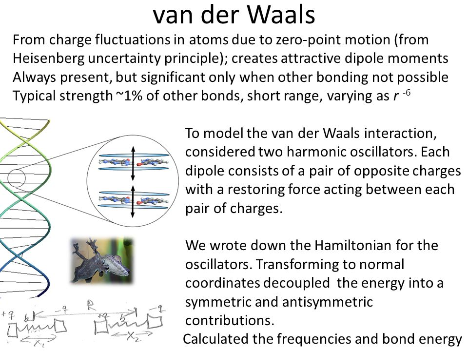 van der Waals From charge fluctuations in atoms due to zero-point motion (from Heisenberg uncertainty principle); creates attractive dipole moments Al