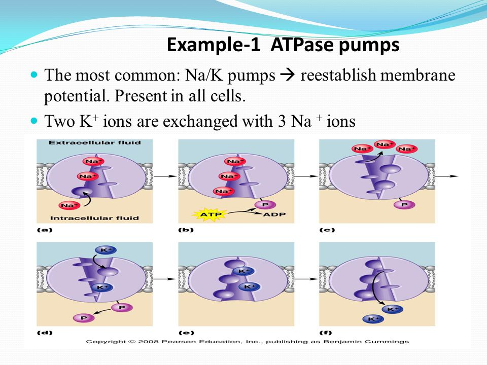 Active transport  ATP (energy) is needed  pump  Moves materials from LOW to HIGH concentration  AGAINST concentration gradient