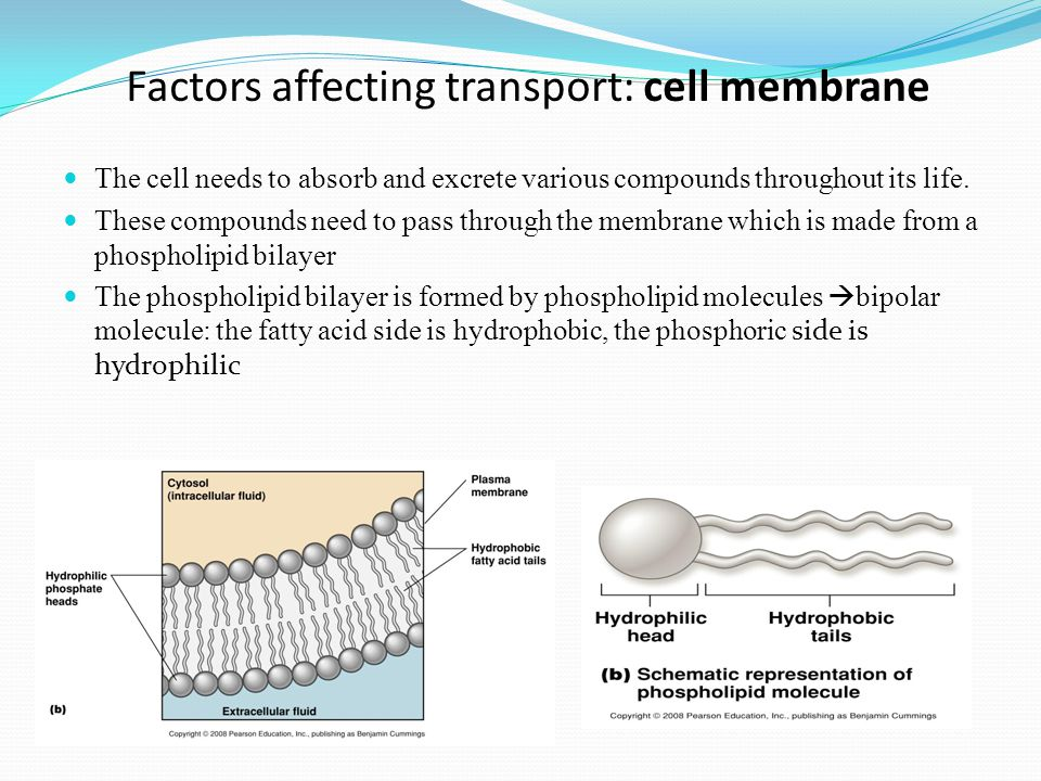 Facilitated diffusion  Doesn't require energy  Uses transport proteins to move high to low concentration Examples: Glucose or amino acids moving from blood into a cell.