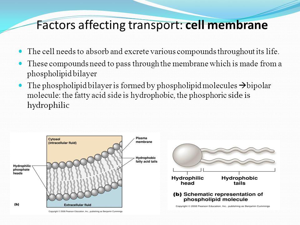 Types of endocytosis 1.