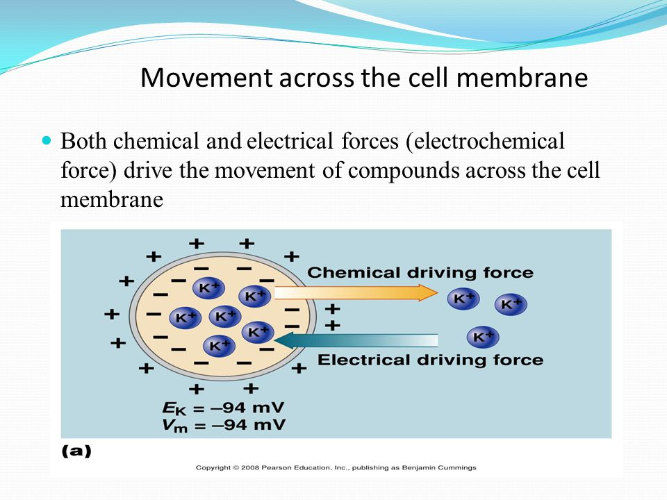Receptor-Mediated Endocytosis Some integral proteins have receptors on their surface to recognize & take in hormones, cholesterol, etc.