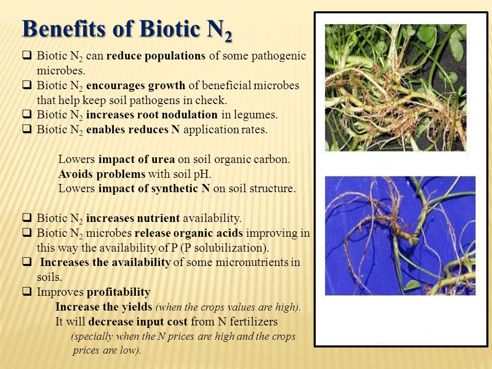  Biotic N 2 can reduce populations of some pathogenic microbes.