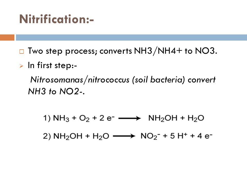 Nitrification:-  Two step process; converts NH3/NH4+ to NO3.
