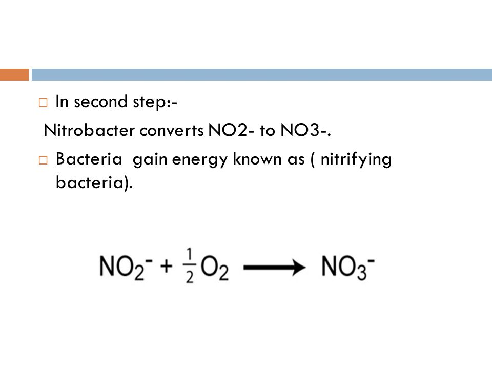  In second step:- Nitrobacter converts NO2- to NO3-.