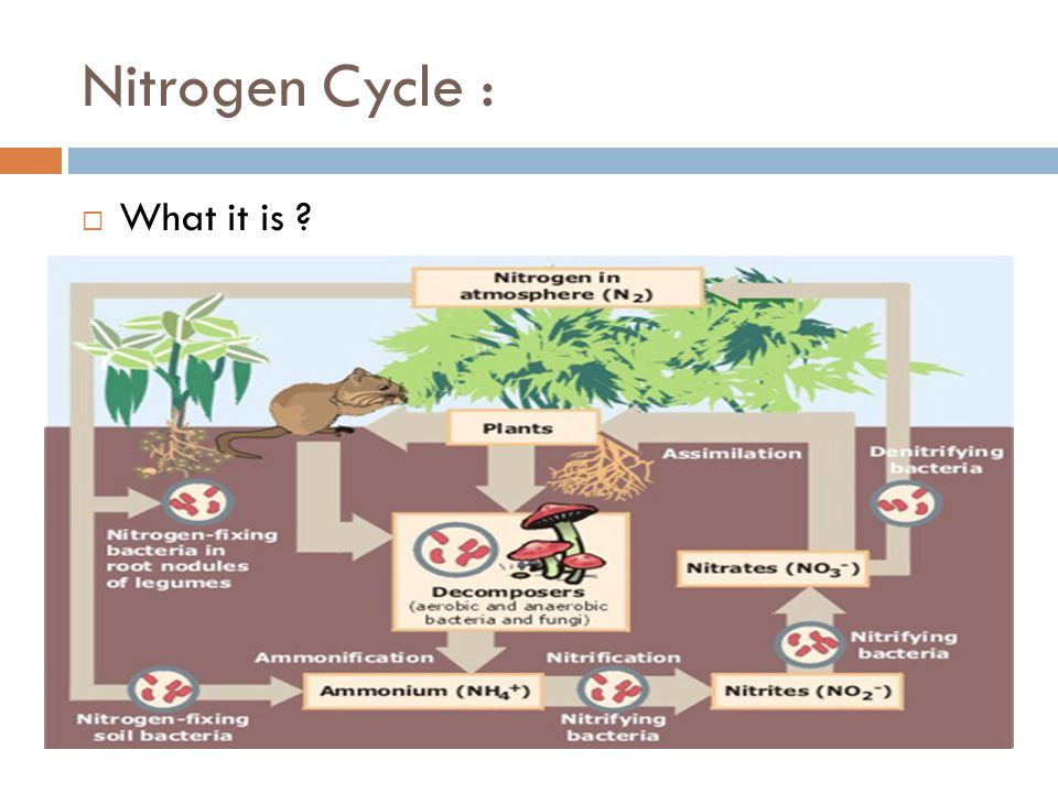 Nitrogen Cycle :  What it is ?