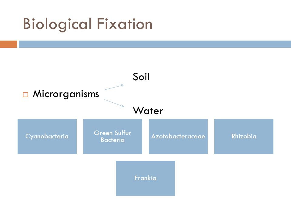 Biological Fixation Soil  Microrganisms Water Cyanobacteria Green Sulfur Bacteria AzotobacteraceaeRhizobia Frankia