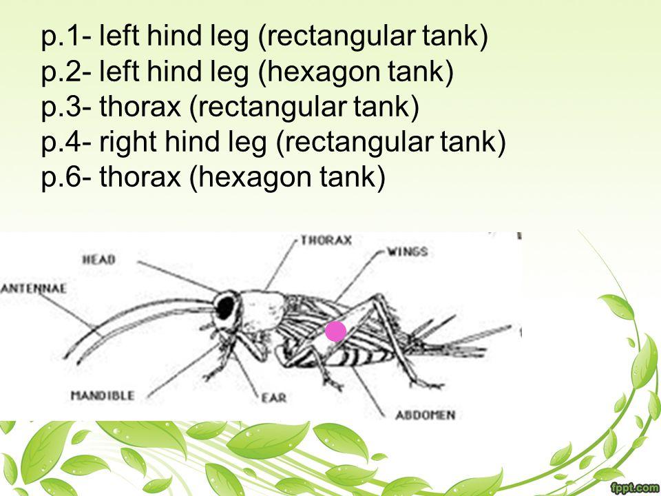 p.1- left hind leg (rectangular tank) p.2- left hind leg (hexagon tank) p.3- thorax (rectangular tank) p.4- right hind leg (rectangular tank) p.6- thorax (hexagon tank)