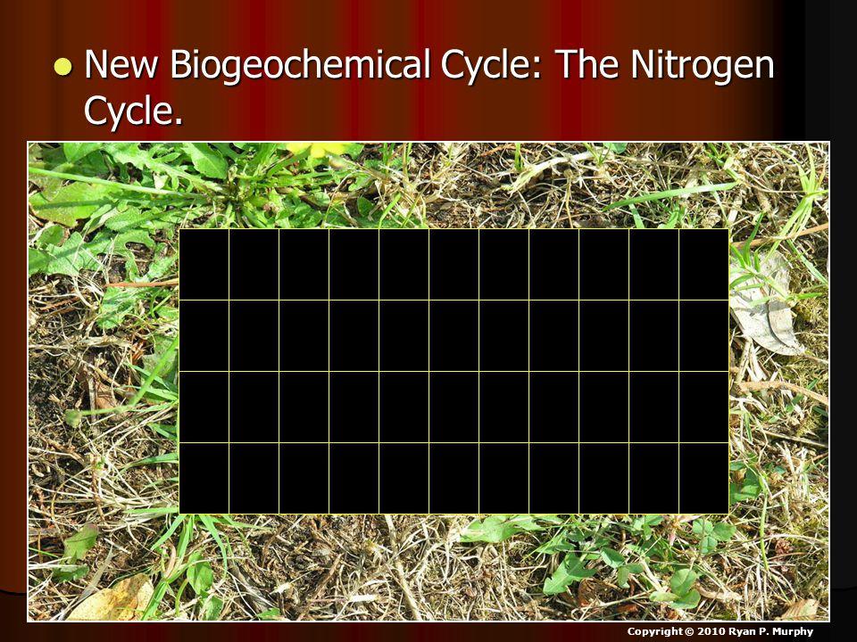 New Biogeochemical Cycle: The Nitrogen Cycle. New Biogeochemical Cycle: The Nitrogen Cycle.