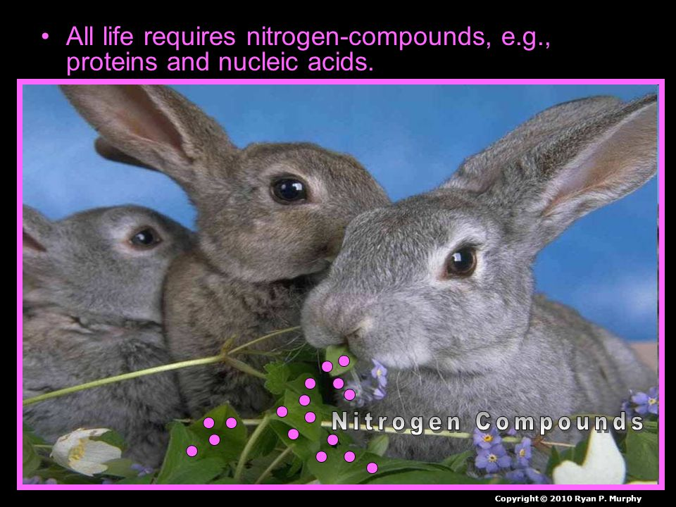 All life requires nitrogen-compounds, e.g., proteins and nucleic acids.
