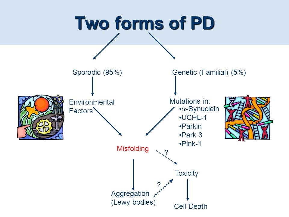 Two forms of PD Mutations in: Environmental Factors Misfolding Aggregation (Lewy bodies) Toxicity Cell Death ? ? Sporadic (95%)Genetic (Familial) (5%)