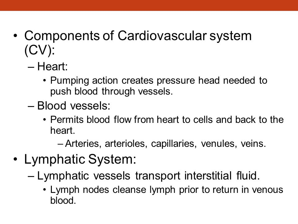 Components of Circulatory System Components of Cardiovascular system (CV): –Heart: Pumping action creates pressure head needed to push blood through v