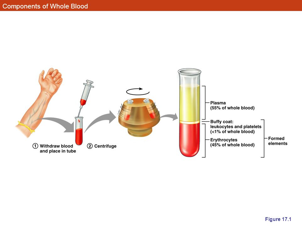 Components of Whole Blood Figure 17.1