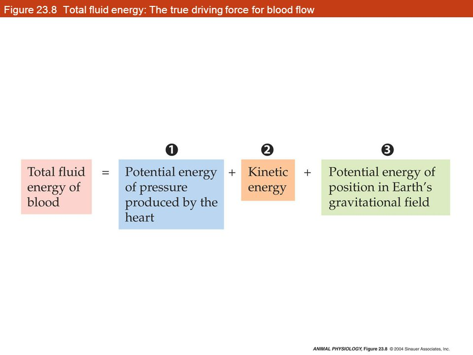 Figure 23.8 Total fluid energy: The true driving force for blood flow