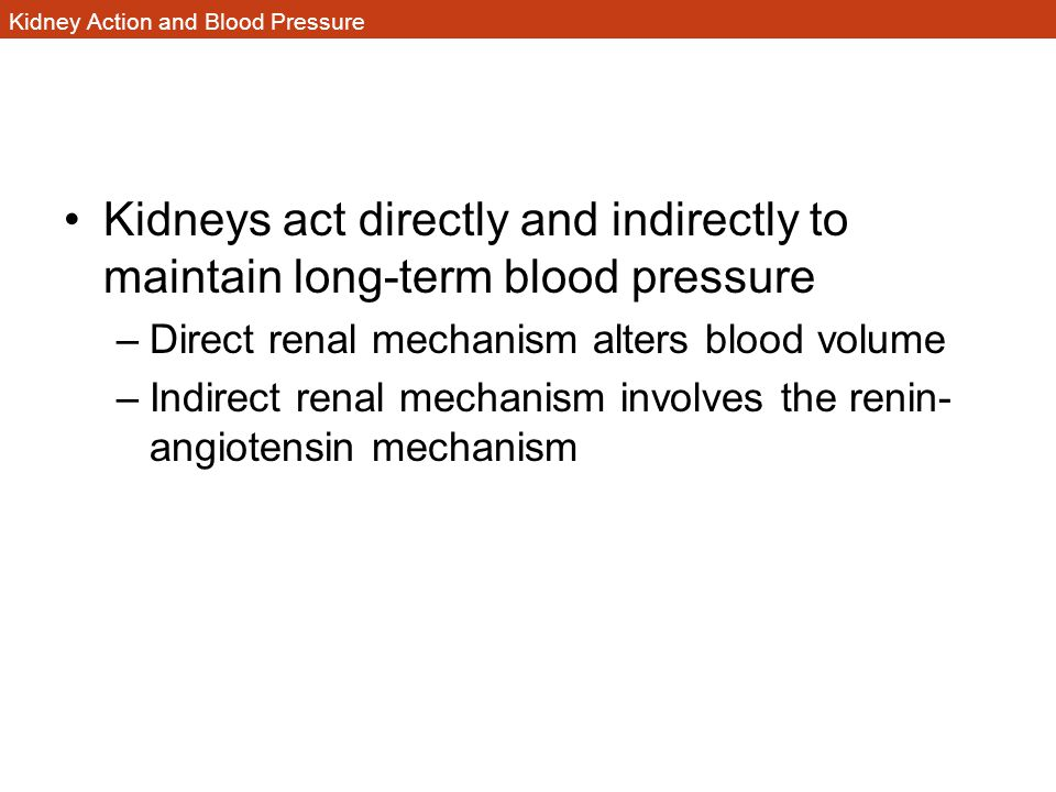 Kidney Action and Blood Pressure Kidneys act directly and indirectly to maintain long-term blood pressure –Direct renal mechanism alters blood volume