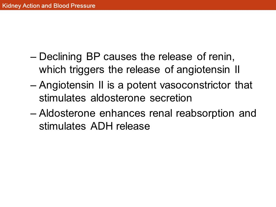 Kidney Action and Blood Pressure –Declining BP causes the release of renin, which triggers the release of angiotensin II –Angiotensin II is a potent v