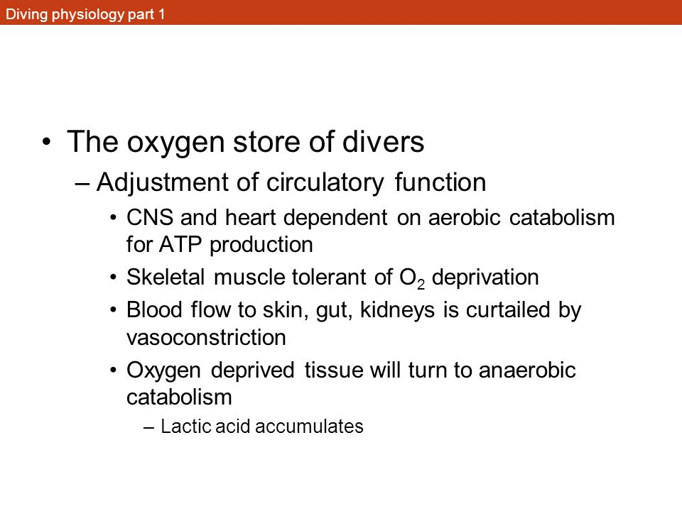 Diving physiology part 1 The oxygen store of divers –Adjustment of circulatory function CNS and heart dependent on aerobic catabolism for ATP producti