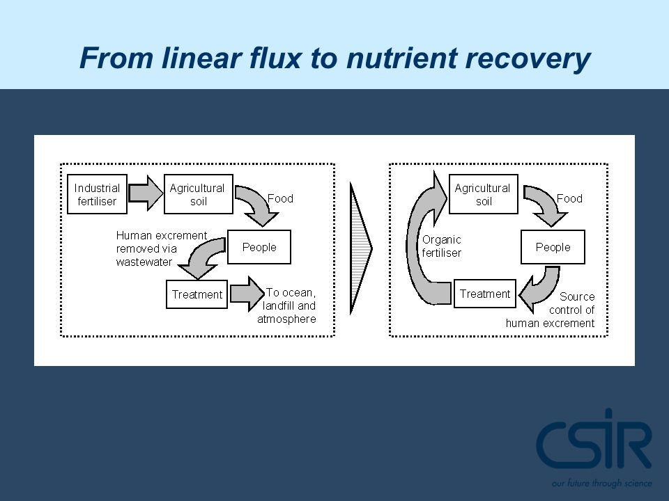 From linear flux to nutrient recovery