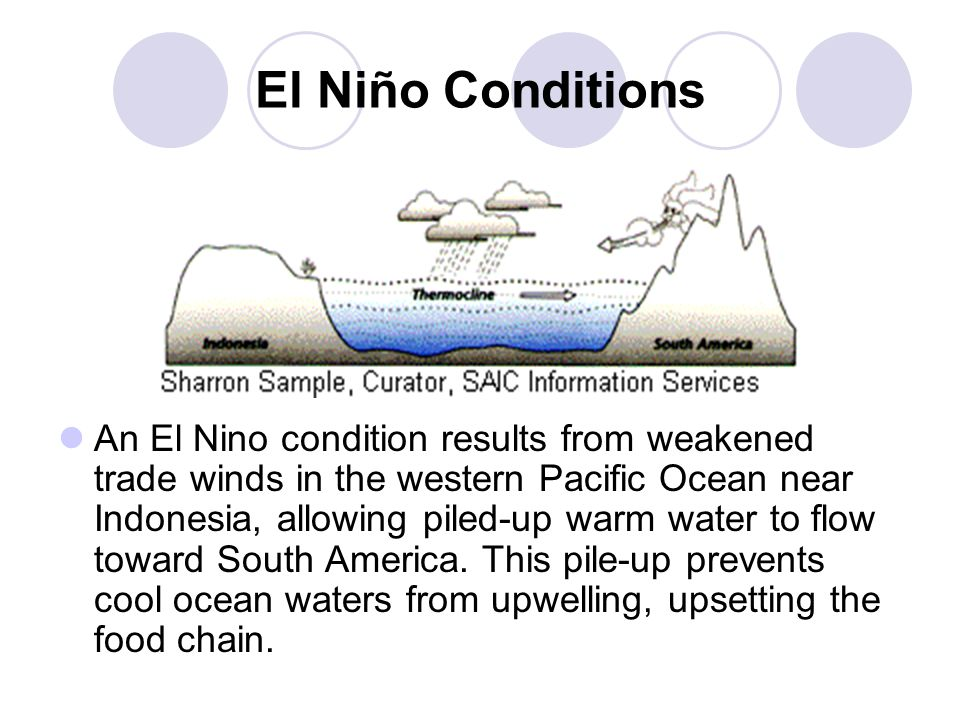 El Niño Conditions An El Nino condition results from weakened trade winds in the western Pacific Ocean near Indonesia, allowing piled-up warm water to flow toward South America.