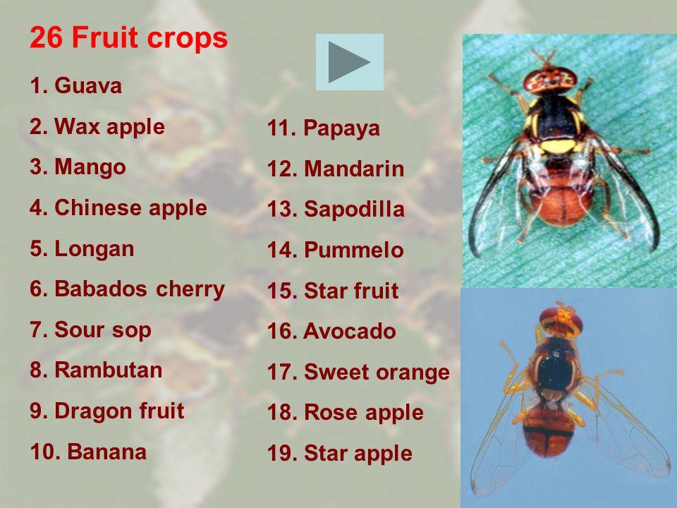 26 Fruit crops 1. Guava 2. Wax apple 3. Mango 4. Chinese apple 5. Longan 6. Babados cherry 7. Sour sop 8. Rambutan 9. Dragon fruit 10. Banana 11. Papa