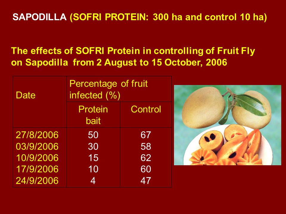 The effects of SOFRI Protein in controlling of Fruit Fly on Sapodilla from 2 August to 15 October, 2006 Date Percentage of fruit infected (%) Protein bait Control 27/8/2006 03/9/2006 10/9/2006 17/9/2006 24/9/2006 50 30 15 10 4 67 58 62 60 47 SAPODILLA (SOFRI PROTEIN: 300 ha and control 10 ha)