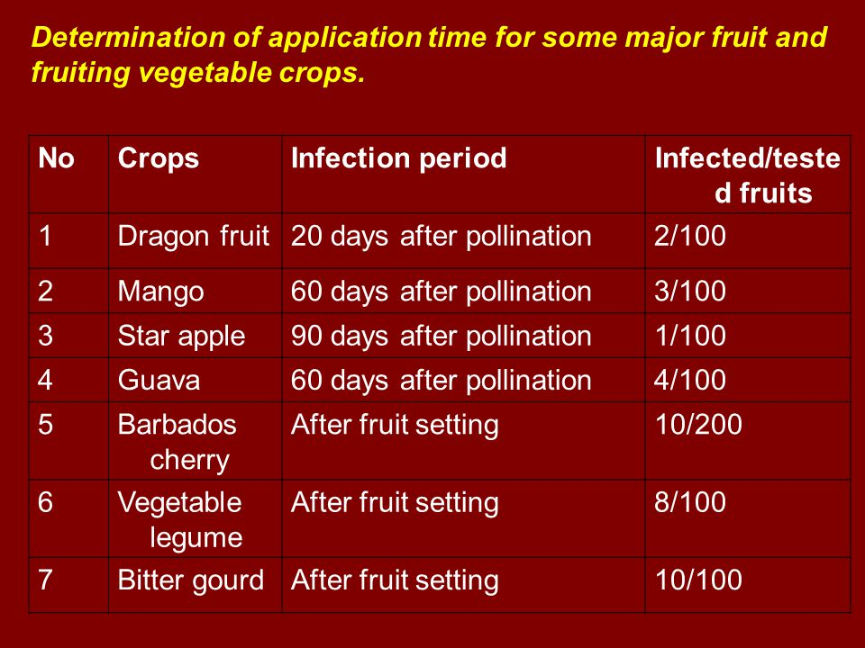 NoCropsInfection periodInfected/teste d fruits 1Dragon fruit20 days after pollination2/100 2Mango60 days after pollination3/100 3Star apple90 days aft