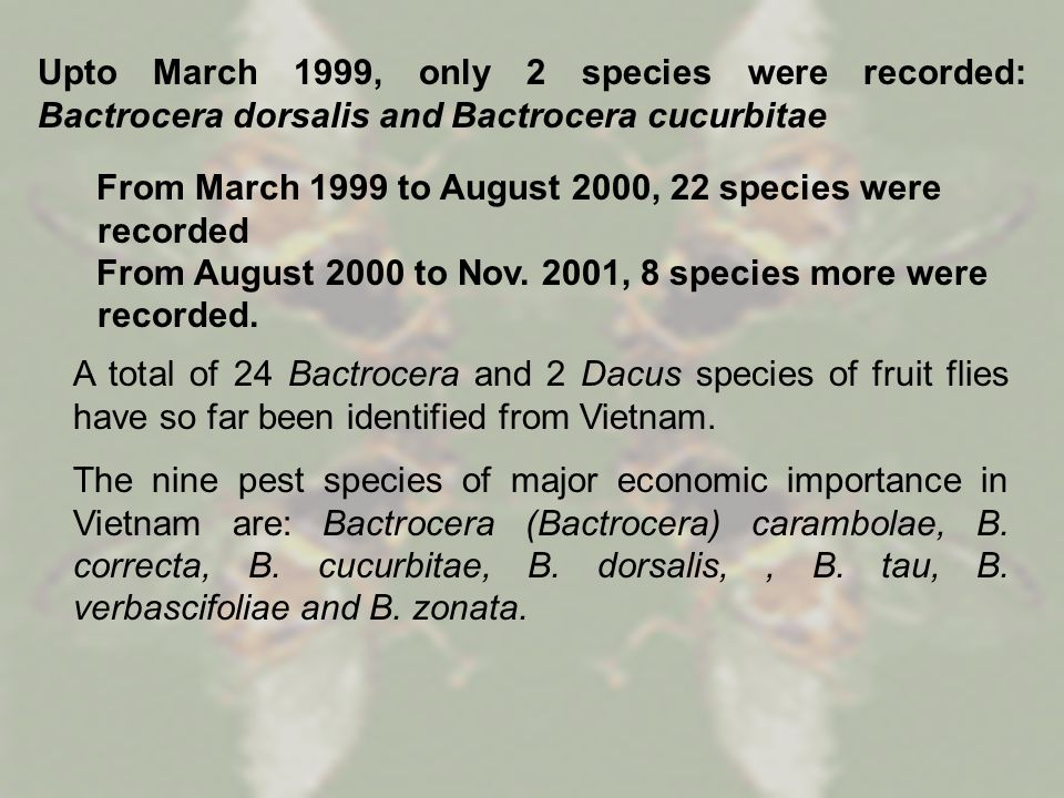 Upto March 1999, only 2 species were recorded: Bactrocera dorsalis and Bactrocera cucurbitae From March 1999 to August 2000, 22 species were recorded From August 2000 to Nov.