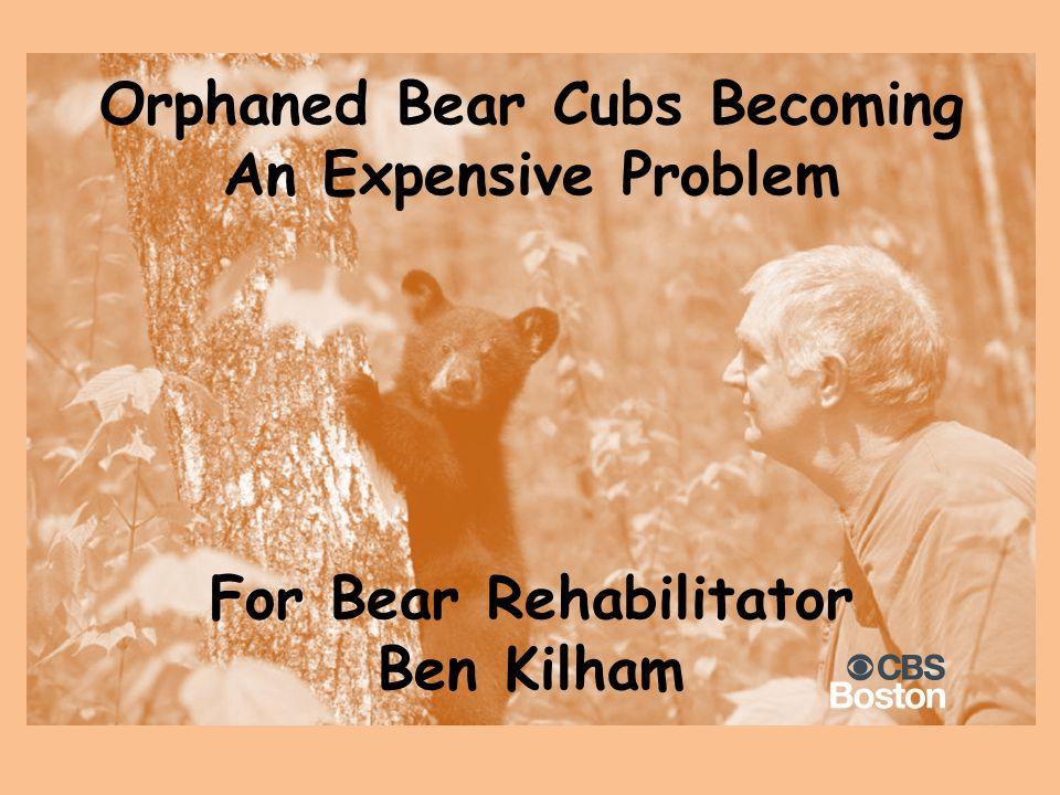 Orphaned Bear Cubs Becoming An Expensive Problem For Bear Rehabilitator Ben Kilham