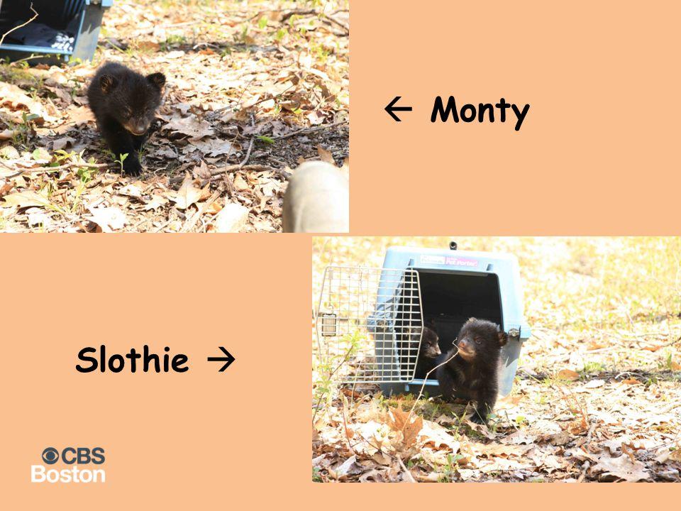  Monty Slothie 