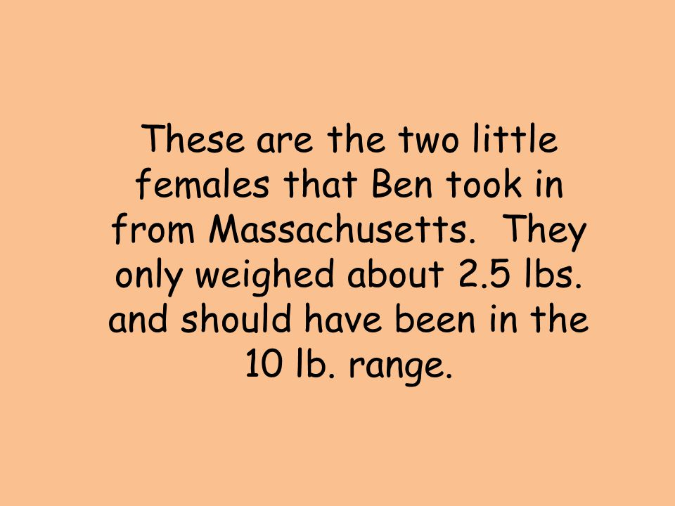 These are the two little females that Ben took in from Massachusetts. They only weighed about 2.5 lbs. and should have been in the 10 lb. range.
