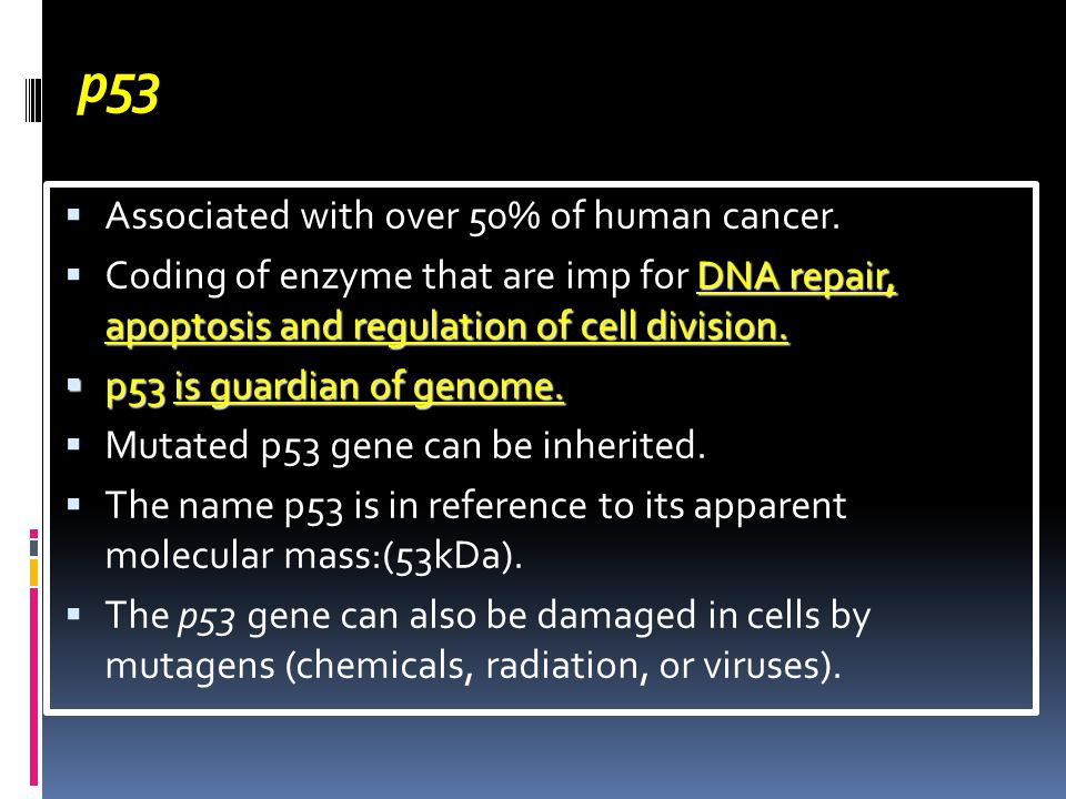 p53  Associated with over 50% of human cancer.