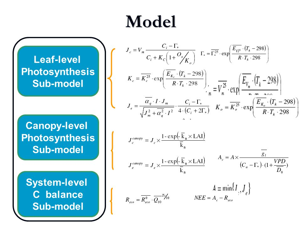 Leaf-level Photosynthesis Sub-model Canopy-level Photosynthesis Sub-model System-level C balance Sub-model Model