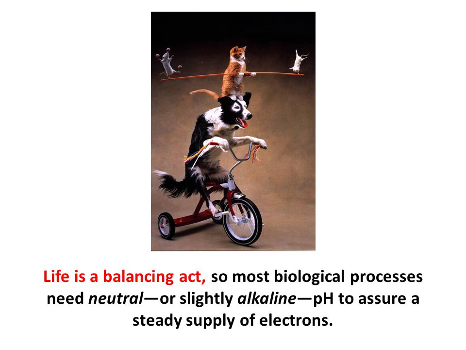 Life is a balancing act, so most biological processes need neutral—or slightly alkaline—pH to assure a steady supply of electrons.