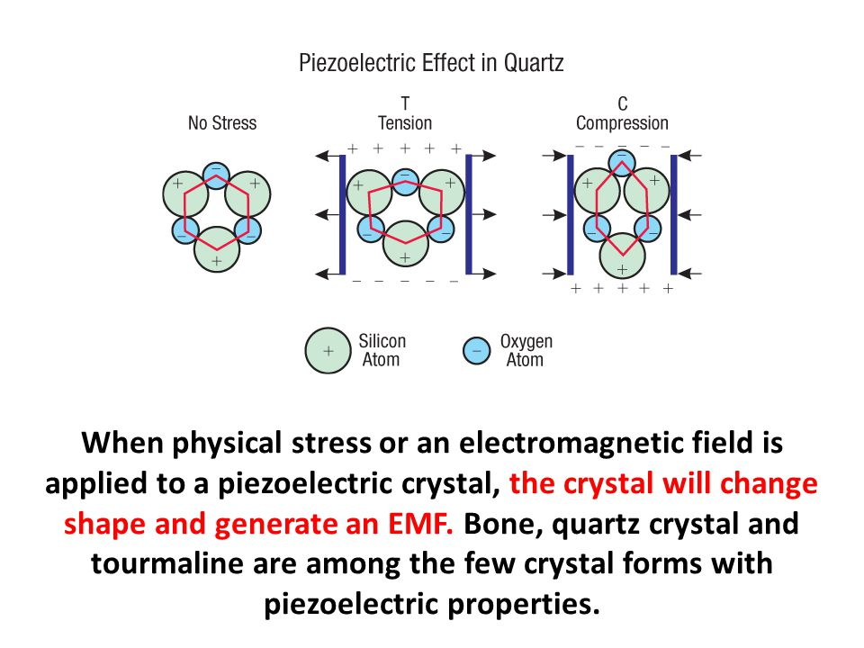 When physical stress or an electromagnetic field is applied to a piezoelectric crystal, the crystal will change shape and generate an EMF. Bone, quart