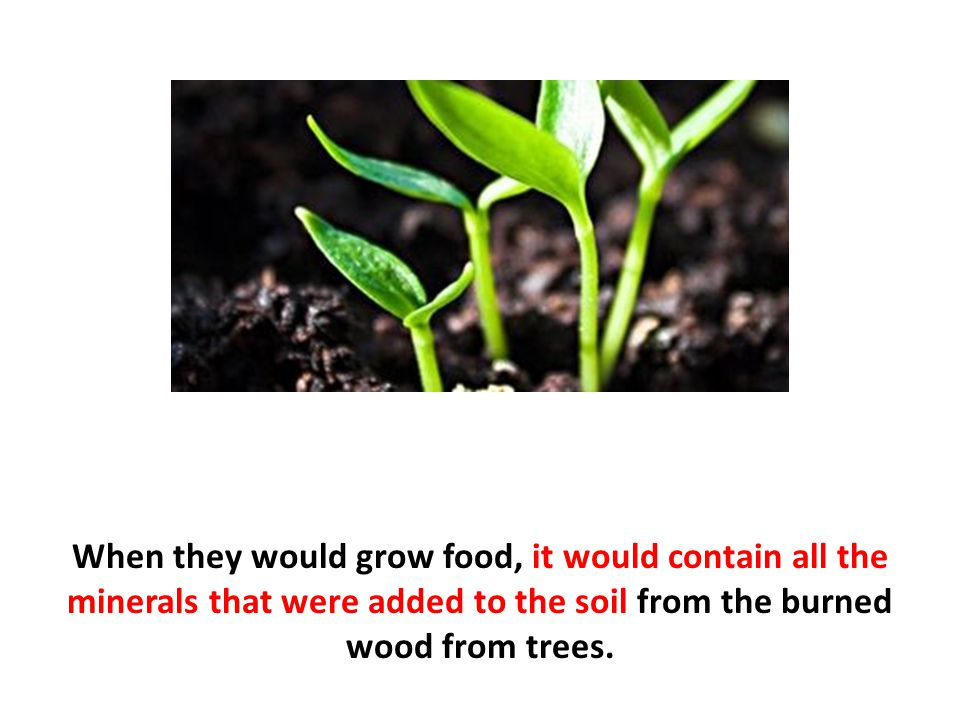 When they would grow food, it would contain all the minerals that were added to the soil from the burned wood from trees.