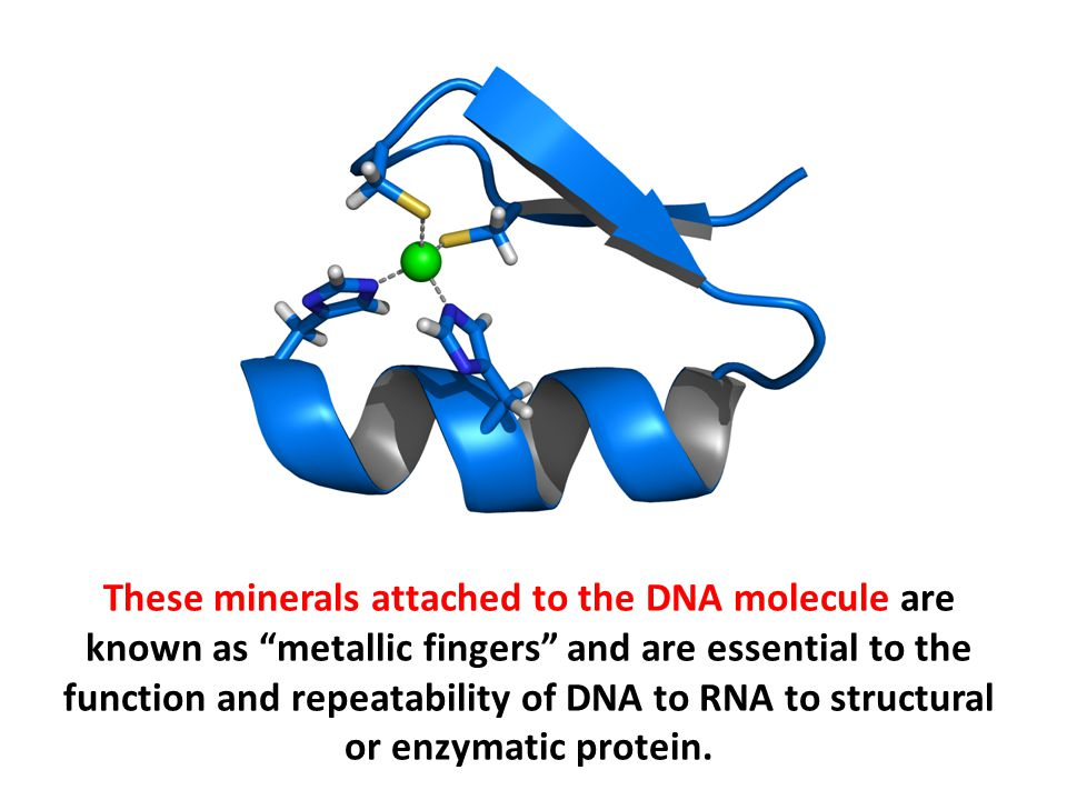 "These minerals attached to the DNA molecule are known as ""metallic fingers"" and are essential to the function and repeatability of DNA to RNA to struc"